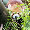 Colchester Zoo 25-01-14  0013