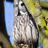 Colchester Zoo 26-01-13  011