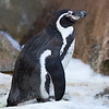 Colchester Zoo 26-01-13  006