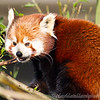 Colchester Zoo 26-01-13  010