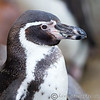 Colchester Zoo 26-01-13  007