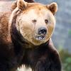 Dartmoor Zoo 28-03-12  015