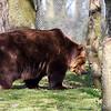 Dartmoor Zoo 28-03-12  011