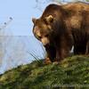 Dartmoor Zoo 28-03-12  020
