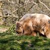 Dartmoor Zoo 28-03-12  007