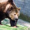 Dartmoor Zoo 28-03-12  014