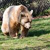 Dartmoor Zoo 28-03-12  016