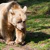 Dartmoor Zoo 28-03-12  017