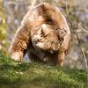 Dartmoor Zoo 28-03-12  006