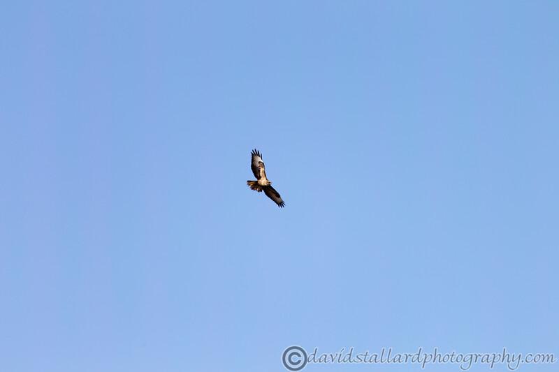 Dartmoor Zoo 28-03-12  001