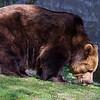 Dartmoor Zoo 28-03-12  013