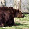 Dartmoor Zoo 28-03-12  010