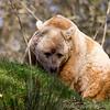 Dartmoor Zoo 28-03-12  005