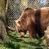 Dartmoor Zoo 28-03-12  012