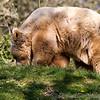 Dartmoor Zoo 28-03-12  008
