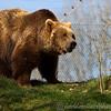 Dartmoor Zoo 28-03-12  019