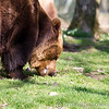 Dartmoor Zoo 28-03-12  009