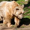 Dartmoor Zoo 28-03-12  018