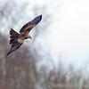 Hawk Conservancy 09-01-13  157