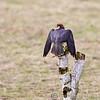 Hawk Conservancy 09-01-13  149