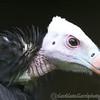 Hawk Conservancy 09-01-13  012