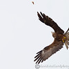 Hawk Conservancy 09-01-13  172