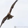 Hawk Conservancy 09-01-13  162