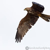 Hawk Conservancy 09-01-13  171