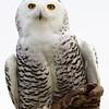 Hawk Conservancy 09-01-13  142
