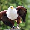Hawk Conservancy 09-01-13  020