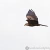 Hawk Conservancy 09-01-13  158