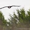 Hawk Conservancy 09-01-13  153