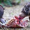 Hawk Conservancy 09-01-13  003