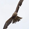 Hawk Conservancy 09-01-13  163