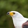 Hawk Conservancy 09-01-13  017