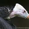 Hawk Conservancy 09-01-13  011