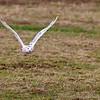 Hawk Conservancy 09-01-13  145