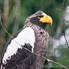Hawk Conservancy 09-01-13  005