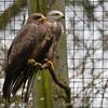 Hawk Conservancy 09-01-13  007