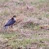 Hawk Conservancy 09-01-13  155
