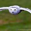 Hawk Conservancy 09-01-13  141