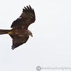 Hawk Conservancy 09-01-13  159