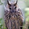 Hawk Conservancy 09-01-13  015