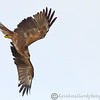 Hawk Conservancy 09-01-13  176