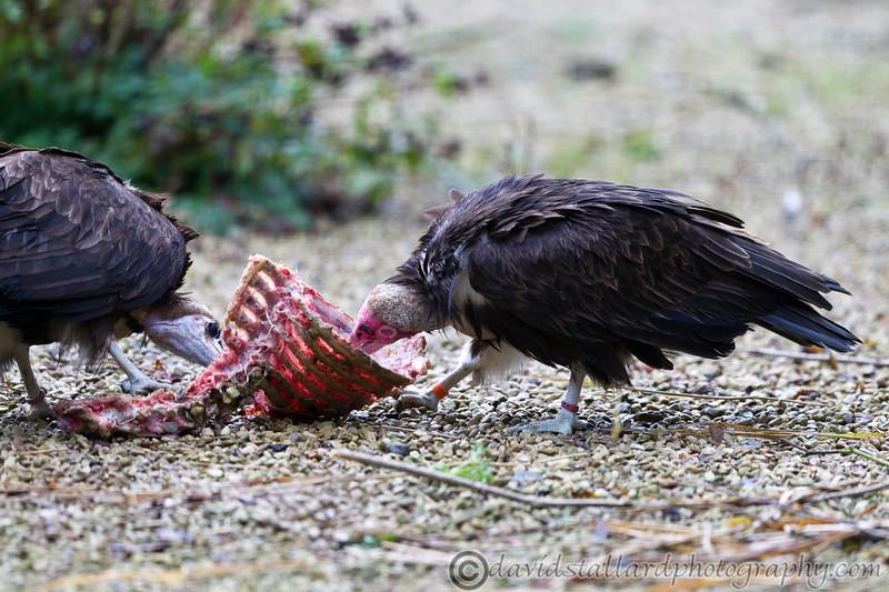 Hawk Conservancy 09-01-13  001