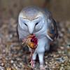 Hawk Conservancy 09-01-13  013