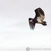 Hawk Conservancy 09-01-13  160
