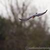 Hawk Conservancy 09-01-13  154