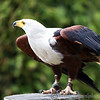 Hawk Conservancy 09-01-13  019