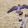 Hawk Conservancy 09-01-13  150